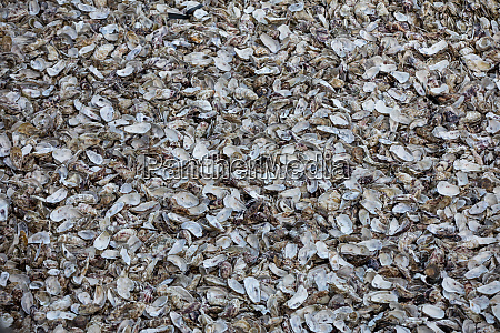 thousands of empty shells of eaten