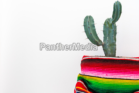 cactus and colorful mexican poncho isolated