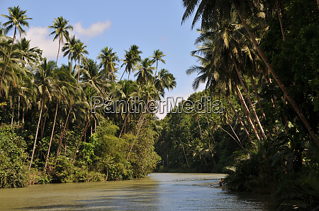 loboc river in the philippines on