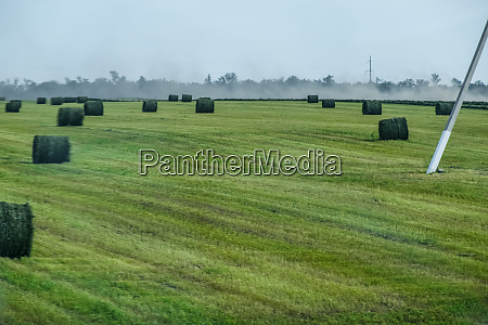 field with bales of hay preparing