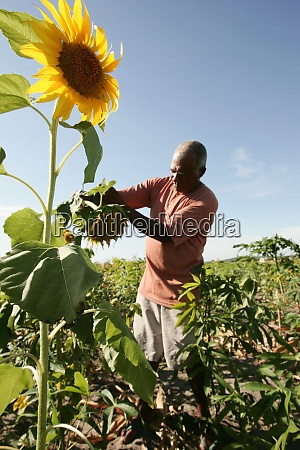agricultural production in bahia
