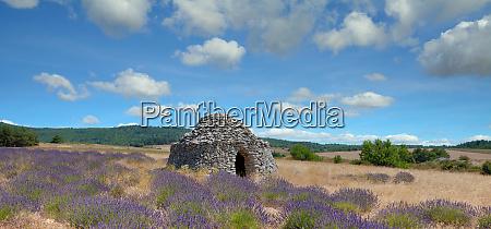 idyllic landscape in provence france