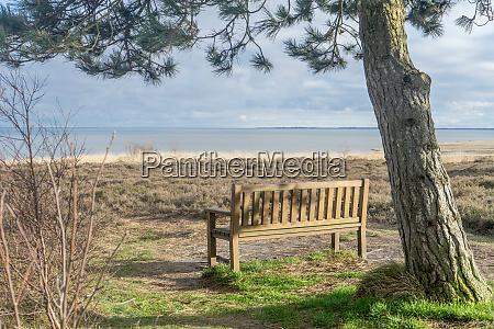bench under a pine tree