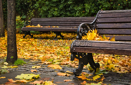 bench covered with leaves in autumn