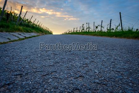 close up road in vineyard focused