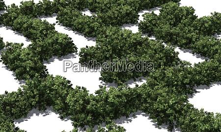 boxwood labyrinth on white background