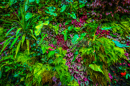 flora of the tropical jungle