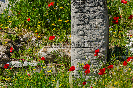 colorful flowers at acropolis