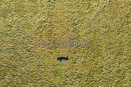 aerial portrait