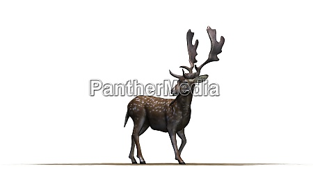 deer in front on a white