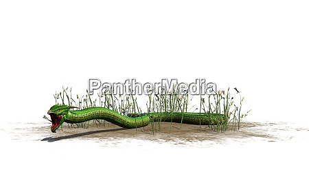 green snake in the grass on