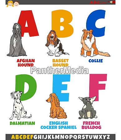 cartoon alphabet collection with purebred dogs