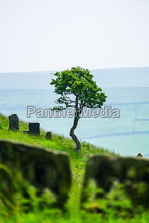 single tree and stile at wycoller