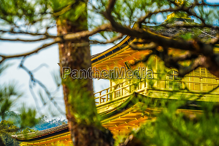 kyoto golden pavilion of the image