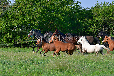 a herd of horses and ponies