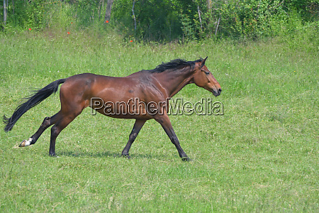 footfall sequence galloping mare 4 5
