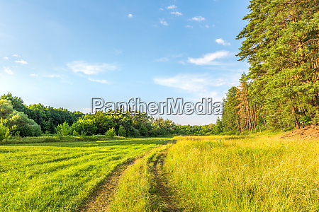 pines and country road