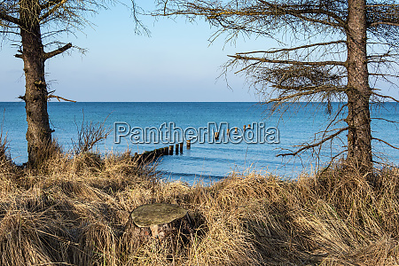 trees on shore of the baltic