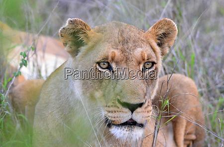 hlane royal national park swaziland young