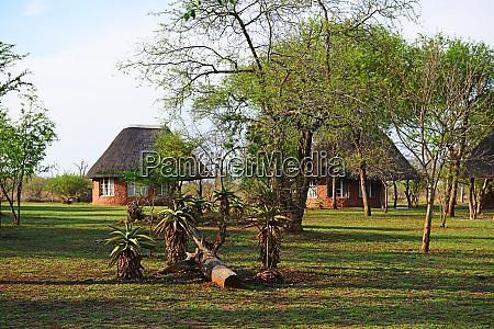ndlovu camp hlane royal nationalpark