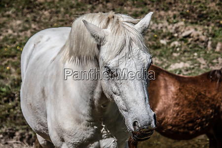 noble graceful horses in the pasture