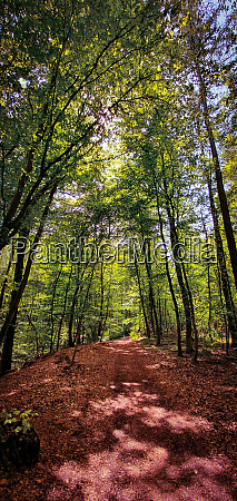 beautiful forest hiking and biking trail