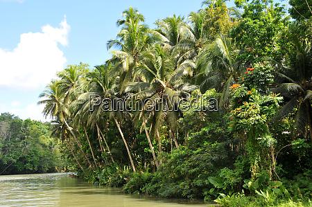 the loboc river on bohol in