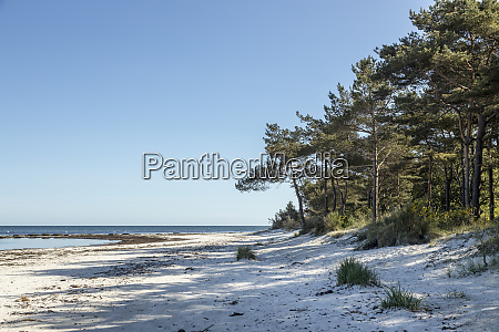lonely beach in danish bornholm island