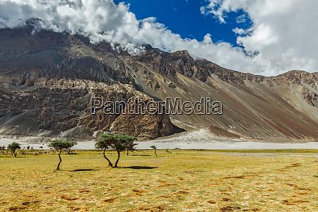 landscape of nubra valley hunber nubra