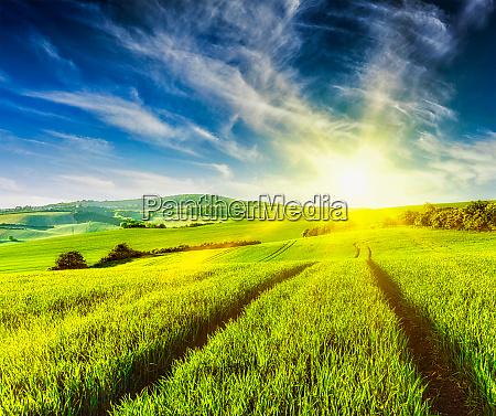 rolling summer landscape