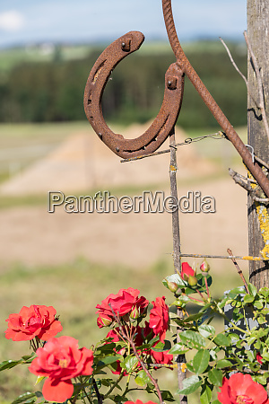 rusty horseshoe and red roses