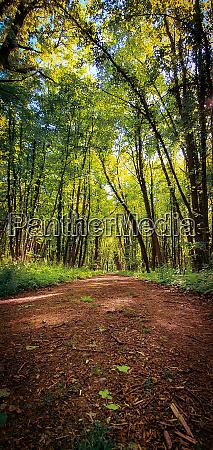 beautiful forest biking and hiking trail