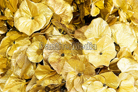 leaves gold