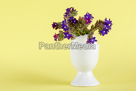 small purple flowers in a white