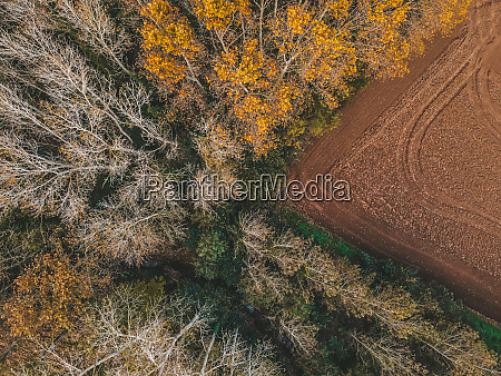 aerial view of a forest in