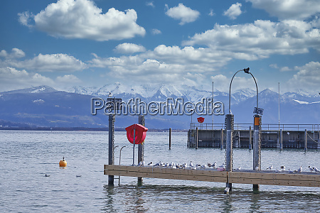 seagulls sit on a jetty by