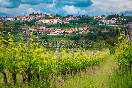 green vineyard with picturesque cityscape chianti