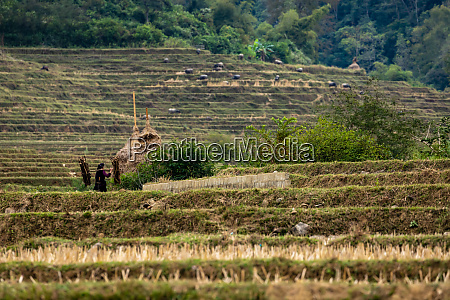 hay and agriculture in vietnam