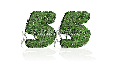 number 55 created of green ivy