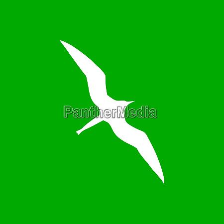 frigate bird and background