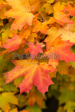 impression of leaves and autumn colors