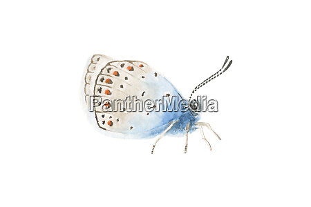 beautiful blue brown watercolor translucent butterfly