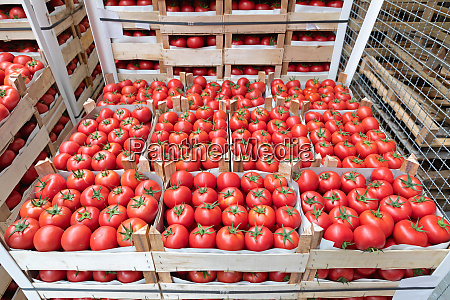 produce tomato