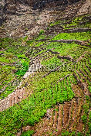 terrace fields in santo antao island