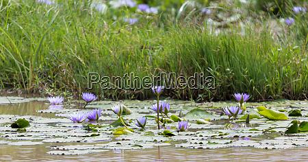 beautiful purple flowers on the water