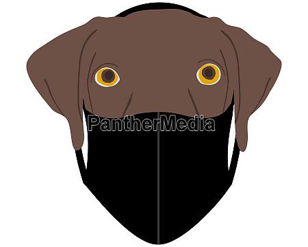 hund mit mundschutz