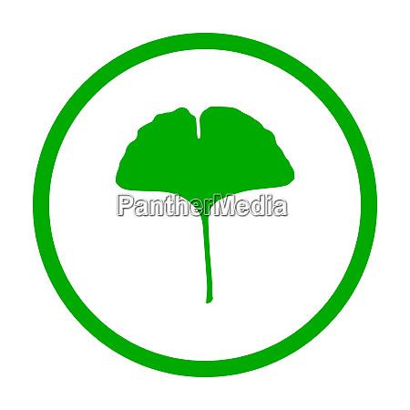 ginkgo leaf and circle
