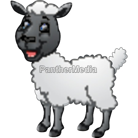 cartoon funny sheep posing isolated on