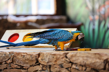 circus shows of parrots on fuerteventura