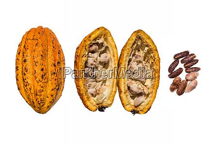 fresh cocoa cacao